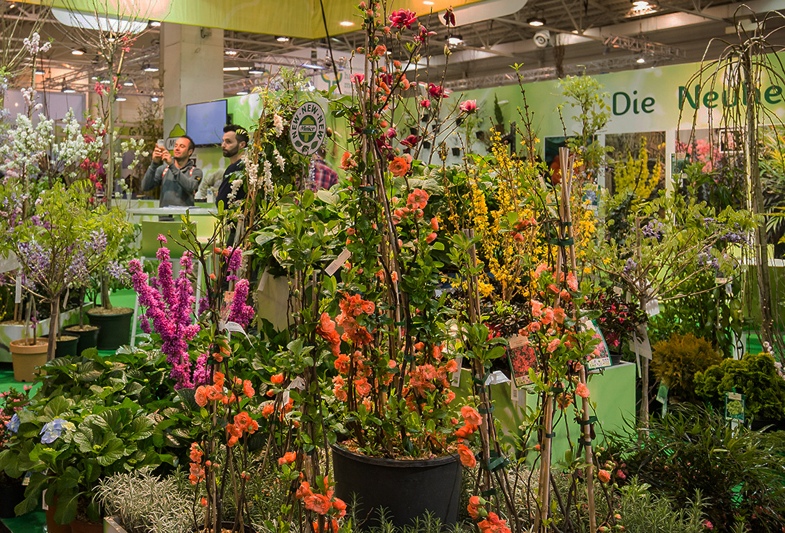 IPM ESSEN:  		Exhibiton area plants